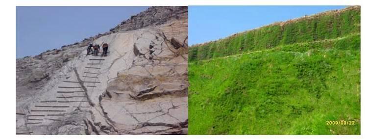 济南岩质边坡绿化.jpg